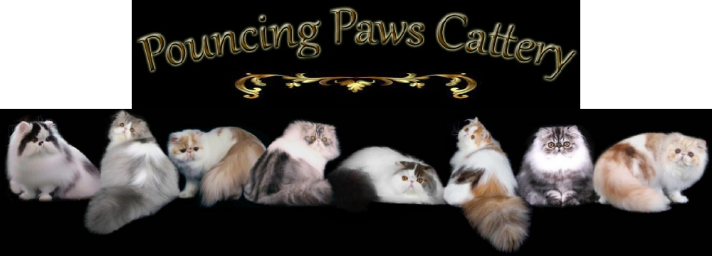Pouncing Paws